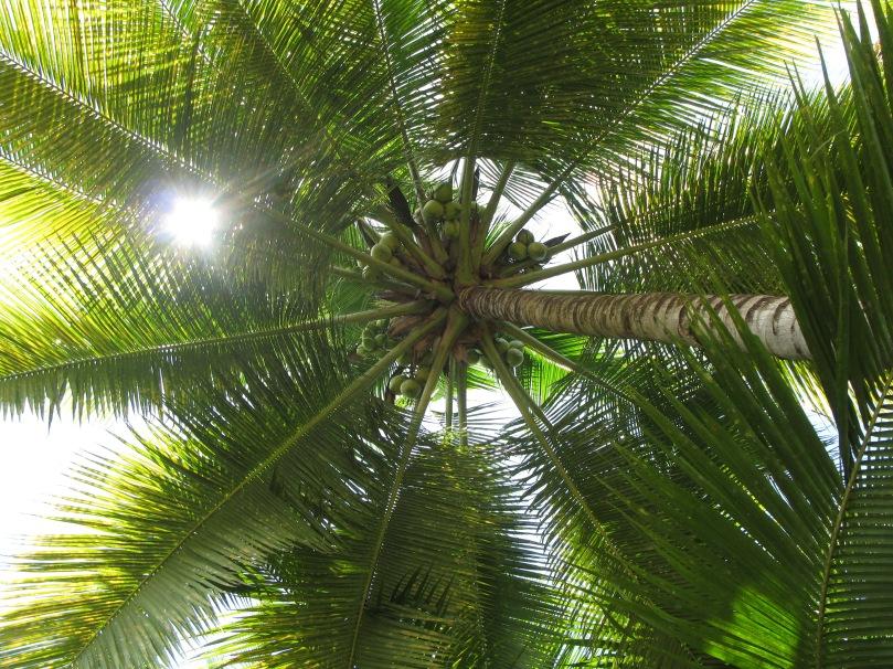 Small farmers in the Philippines reach first milestone towards the production of sustainable coconut oil / Kleinbauern auf den Philippinen erreichen ersten Meilenstein auf dem Weg zur Herstellung von nachhaltigem Kokosöl
