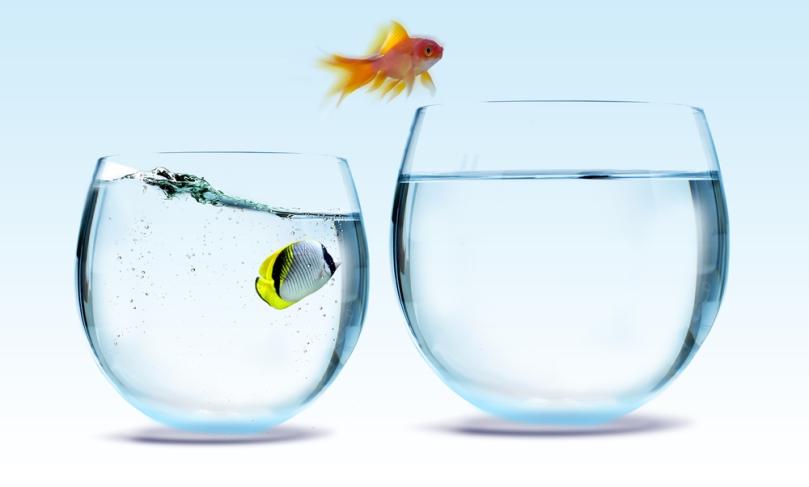 Fish-bowls-jumping-SS-55400329